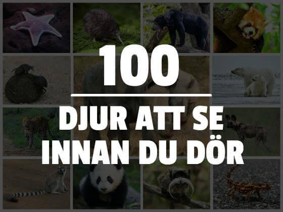 100 djur att se innan du dör