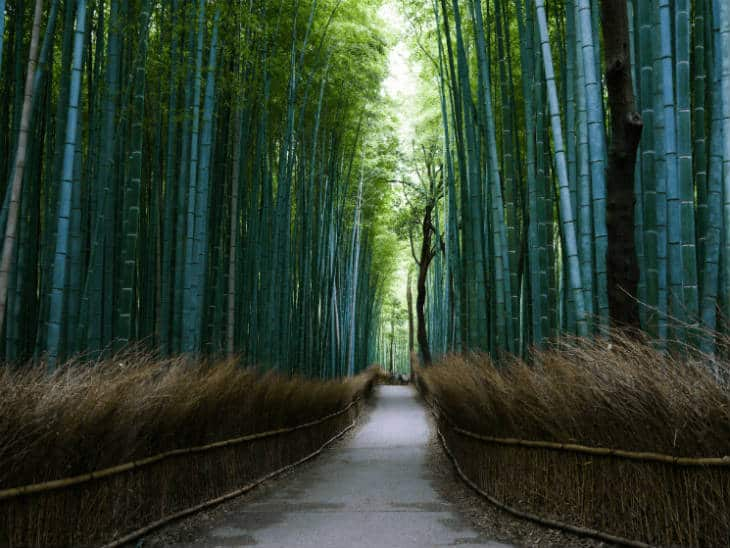 Bamboo-forest (1)