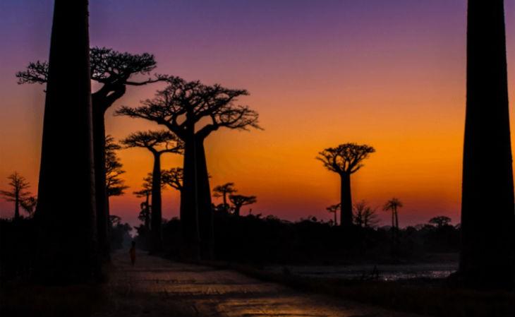 Baobab-Avenue (1)