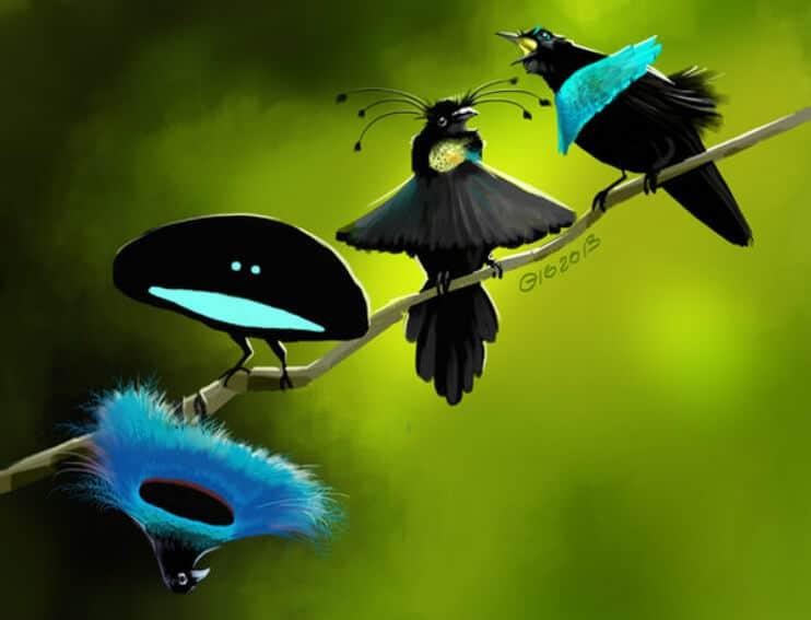 Paradisfågel