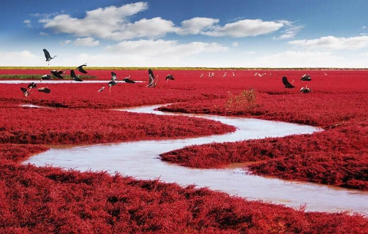 panjin-red-beach-china