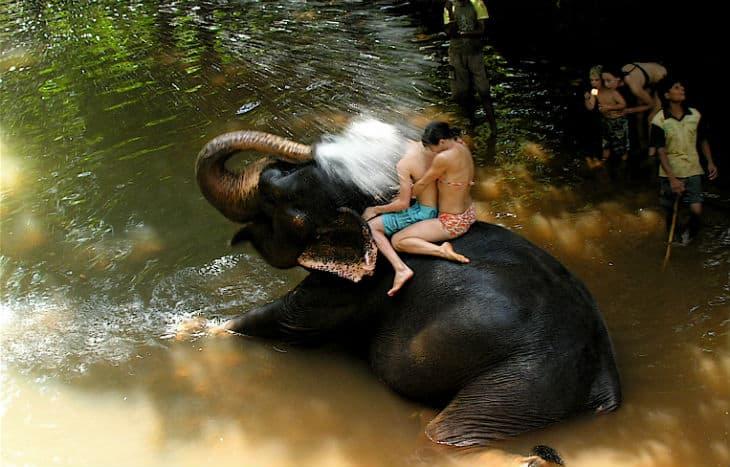 Bada med elefant