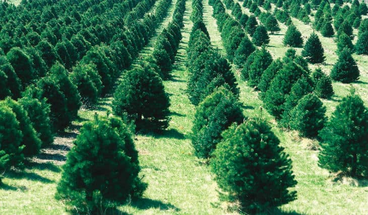 plantera ett träd