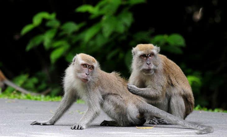 Naturreservat singapore
