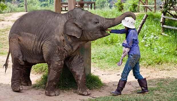 Elefant camp Chiang Mai