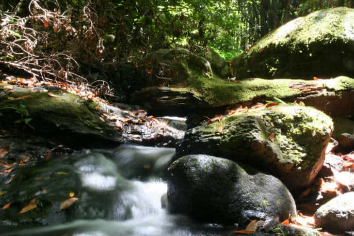 bosque_del_Cedro