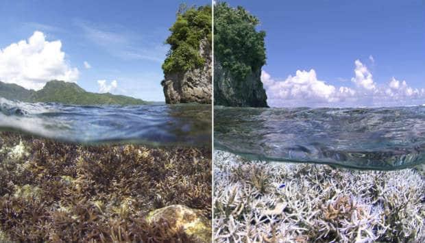 blekt korallrev