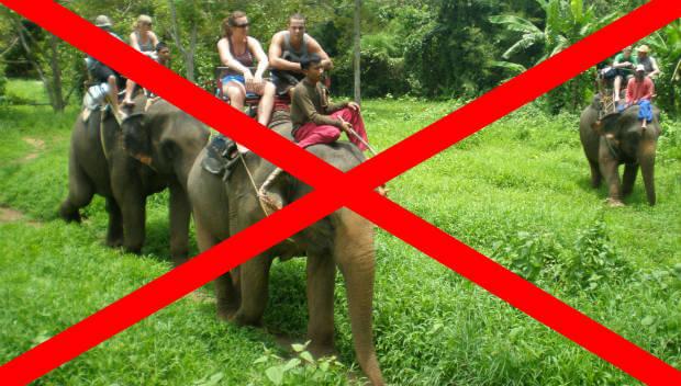 elefantridning stoppas