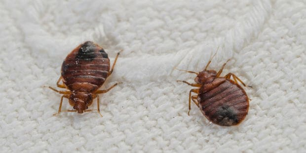 avoid bed bugs