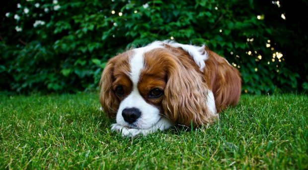 hundreseförsäkring