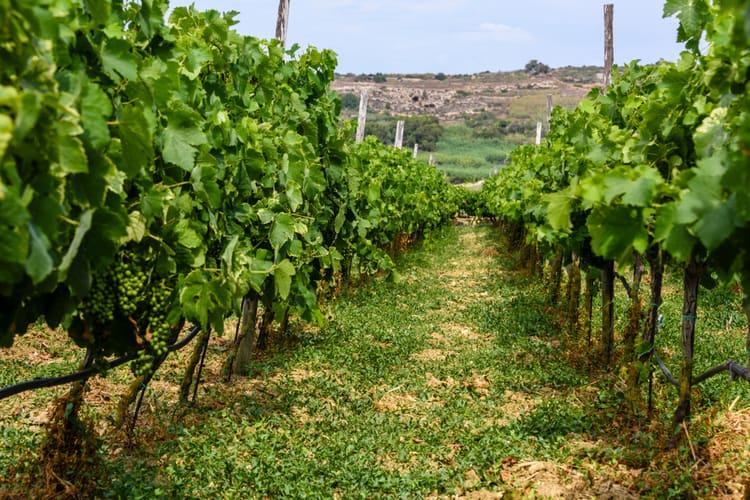maltesiskt vin