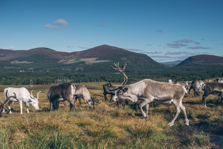 Cairngorms National Park in Scotland