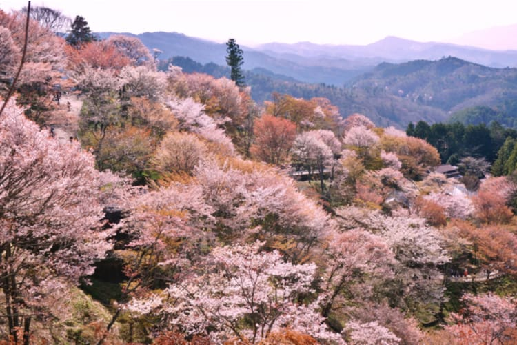 Yoshino Kumano National Park
